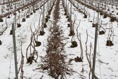 Vinter-Champagne